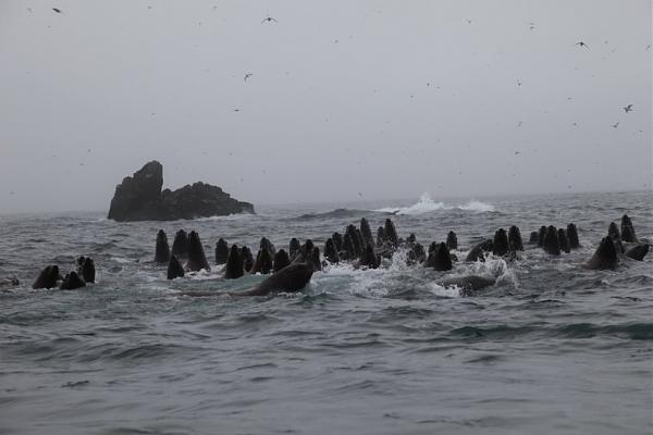 Таким увидели остров Ионы путешественники.